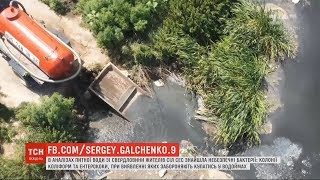 Життя на фекальній міні: переповнені відстійники затопили гектари лісу біля Києва