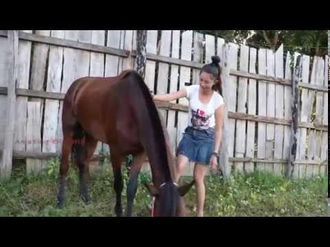 Amazing girl.. Pacaran sama kuda