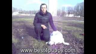 клещи - как защитить собаку?Чем обрабатывать собаку от клещей?