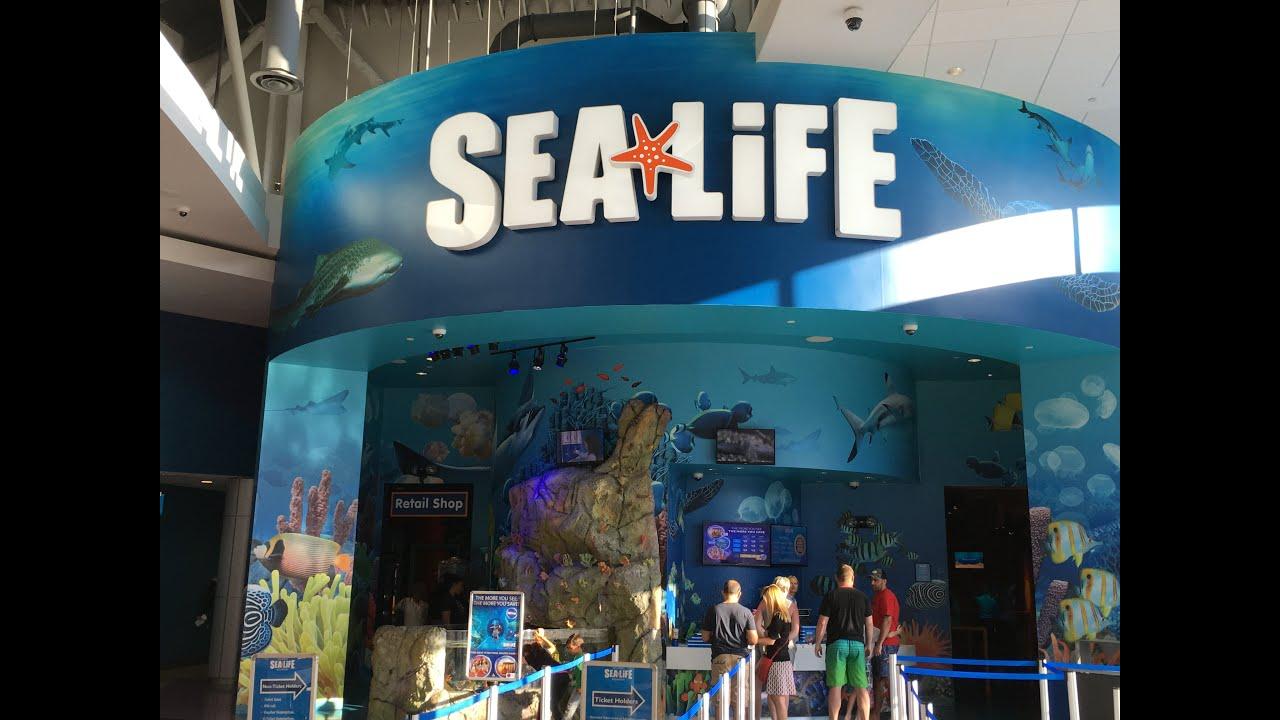 Orlando Sea Life Aquarium - 13-May-2016 - YouTube