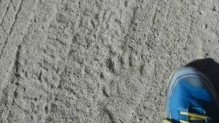 Day 205.1 Caching Water - Bear Footprints