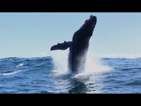 Monterey Bay Whale Watch, Humpbacks and Dolphins, 4/14/17