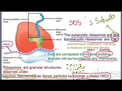 Telugu Neet Tutorials Ribosomes Cell The Unit Of Life Youtube