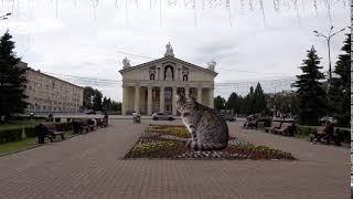 Кот около драматического театра в Нижнем Тагиле