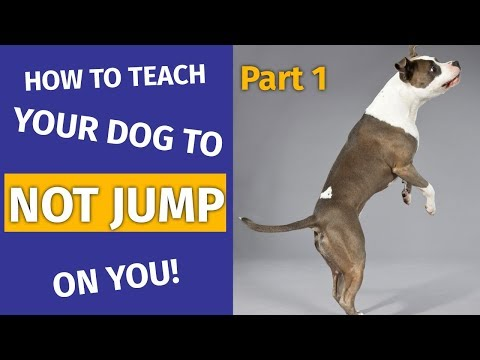 How to Train Your Dog Not to Jump (Part 1) | Animal Behavior College
