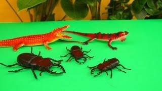 Животные. Насекомые. Видео игрушки. Приключение жуков. Мир животных