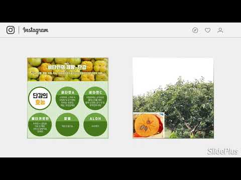 부유 단감 가을 제철 과일 효능 1박스 4Kg 1