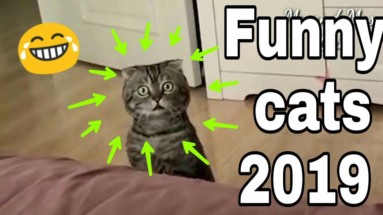 Weltkatzentag - jährlich am 8.August