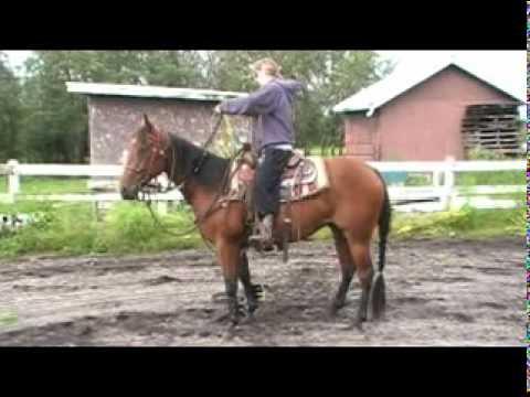 """2007-bay-gelding-""""gwak""""at-home-july10,2011"""