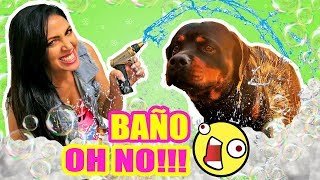 BAñO A MI PERRO GIGANTE, RUTINA Y REGALO ESPECIAL! SandraCiresArt ft Chromebook