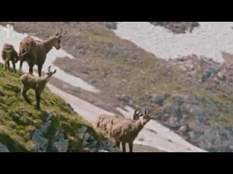 Baaz ka shikar/ goshawk hunting