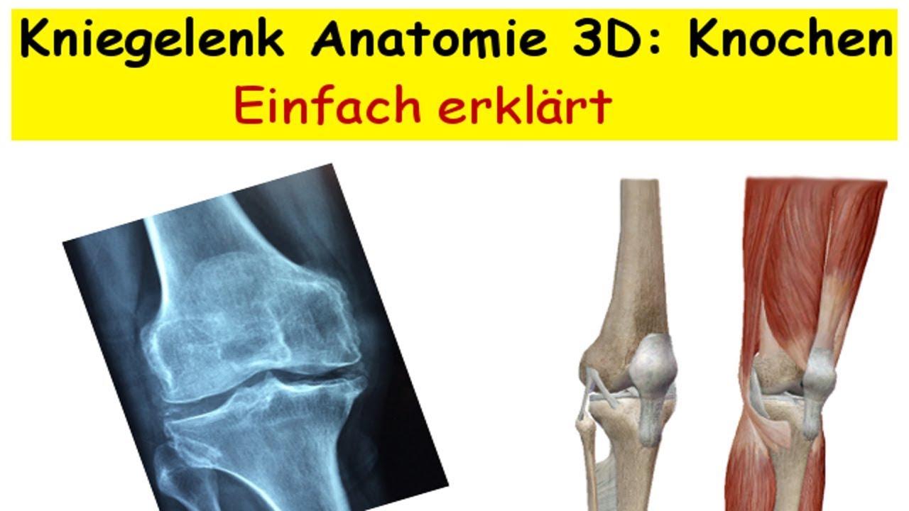Kniegelenk Anatomie 3D: Knochen - YouTube