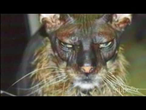 ugliest cat in the world.jpg - YouTube