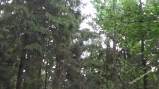Проливной дождь. Шум дождя. Звук дождя. Релакс. Медитация. Сон. Звуки природы