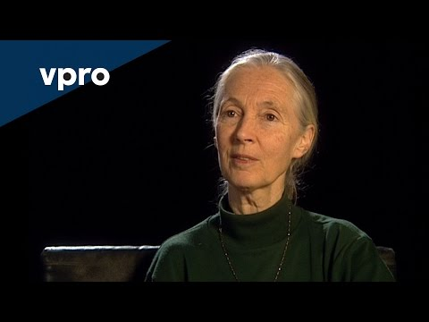 Of Beauty and Consolation Episode 3 Jane Goodall