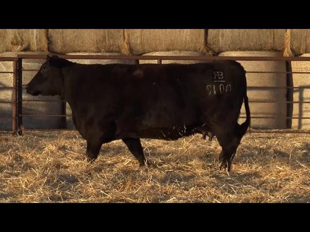 Classic Angus Ranch 9100