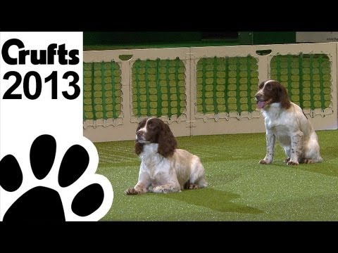 Gundog Display  - Adrian and Caroline Slater - Kipperidge Gundogs - Crufts 2013