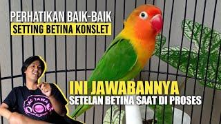 Download lagu INI JAWABAN VIDEO SEBELUMNYA | PERHATIKAN BAIK-BAIK SETTINGAN BETINA SAAT DI PROSES MENJADI KONSLET