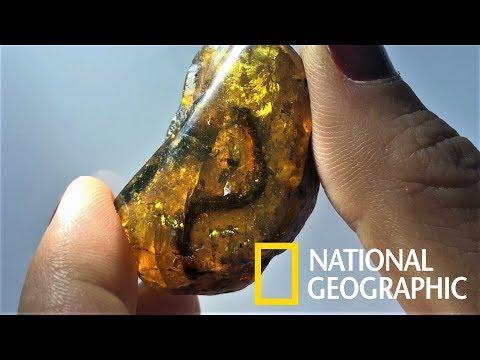 罕見!9900萬年琥珀中驚見幼蛇化石《國家地理》雜誌