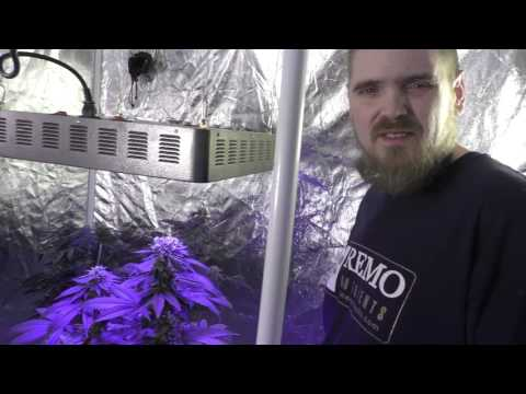 Ryan's Grow Tent  LED Vs HPS