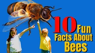 10 Amazing Facts About Bees And Wasps
