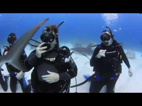 Stuart Cove's dive movie 2016 1