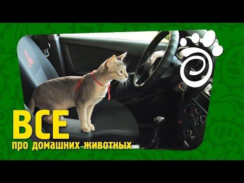 Транспортировка Кошек. Все О Домашних Животных