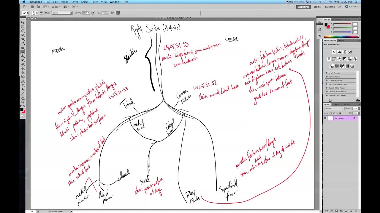 Branches of the Sciatic Nerve - YouTube Sciatic Nerve Branches