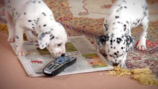 Sky Movies Disney Recreating 101 Dalmatians Scene HD