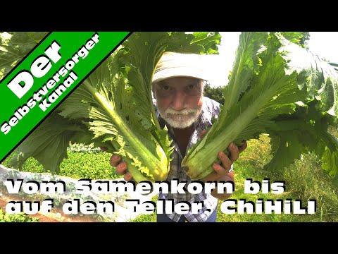 Vom Samenkorn bis auf den Teller.  ChiHiLI