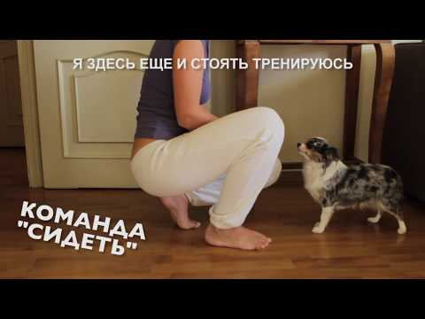 Вопрос: Как научить собачку чихуахуа много двигаться в квартирных условиях?