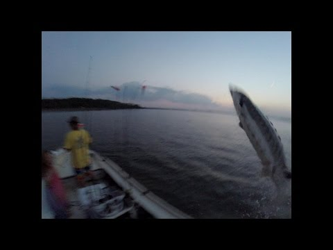 Giant Sturgeon Nearly Jumps In The Boat Slaps Daughter Caught On GoPro Edisto Sc