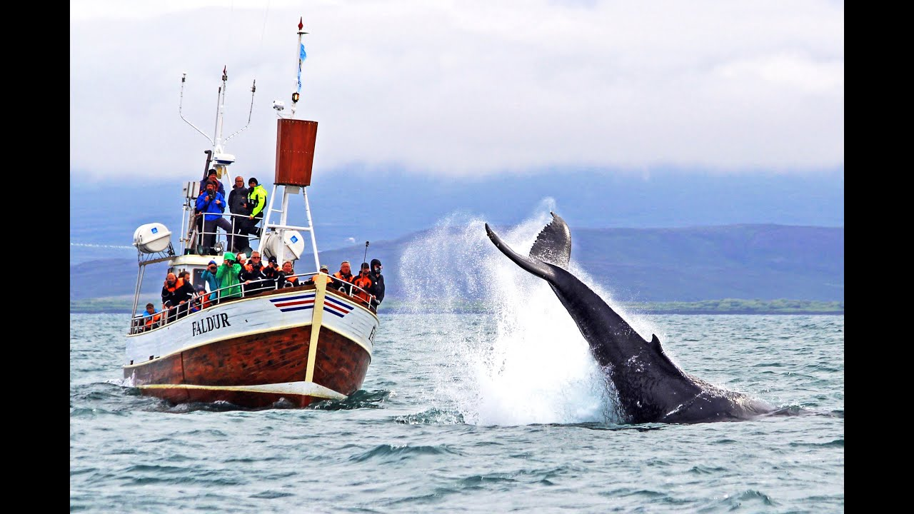 Best Whale Watching Tour Reykjavik