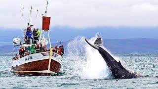 Whale Watching Húsavík Iceland - Walbeobachtung Island