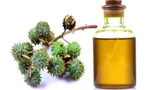 अरंडी के तेल के फ़ायदे और नुकसान │ Arandi Ke Tel Ke Fayde │Health benefits of castor oil