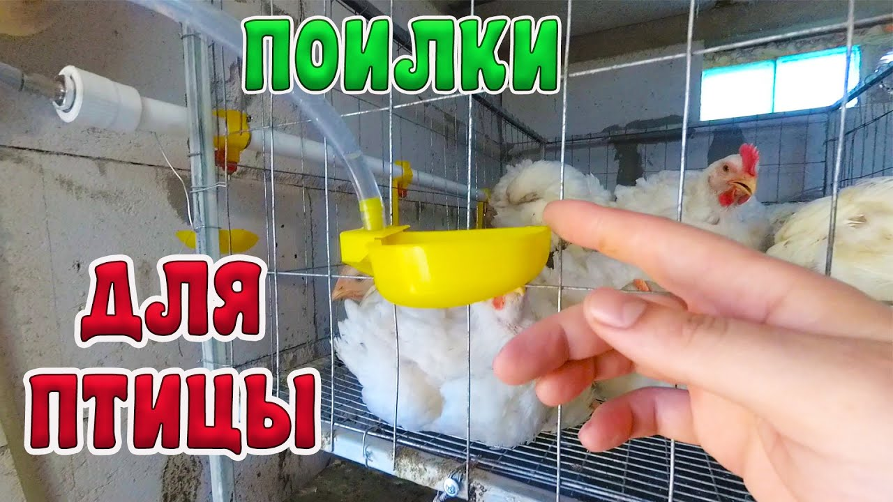 Жалею что раньше не купил эти ПОИЛКИ для птицы. Автономный Птичник в СНТ
