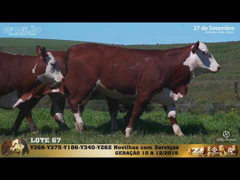 LOTE 067