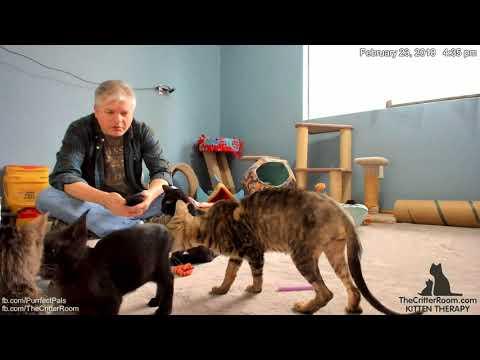 Olympian Kittens - Sequins Returns, Update