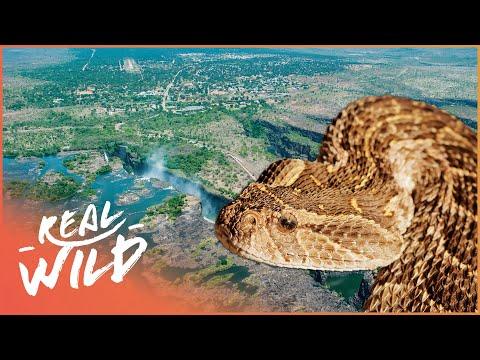 Tswapong | Botswana's Wild Kingdoms | Real Wild Documentary