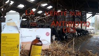 La vérité sur les antibiotiques en élevage