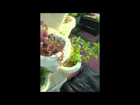 Kate's Hydro-Stacker Veggie Garden #3