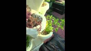 Gambar cover Kate's Hydro-Stacker Veggie Garden #3