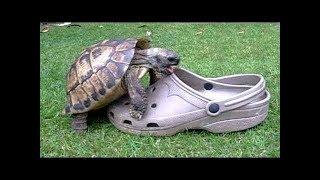 Подборка видеороликов с милыми и смешными черепахами.