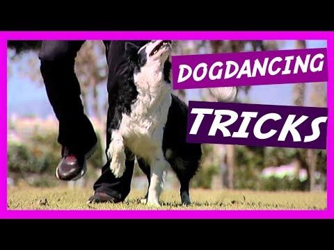 🎶 AMAZING DOG TRICKS by border collie Nüwa & Kitsune ( Vol. 1 ) dogdancing