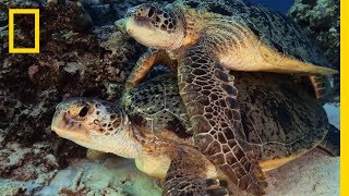 New Caledonia: The Coral Garden | National Geographic