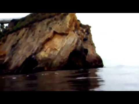 Animal Documentary HD   White Shark Hunter And Hunted   National Geographic