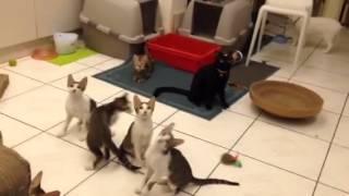 搞笑瘋狂同步~ CAT    synchronism