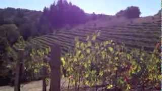 Sonoma County Vineyards and Vintners