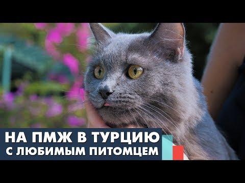 Как перевезти кошку или собаку в Турцию? Что нужно знать: прививки, документы, билеты