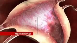 crystal x www terapikeputihan com mengenal sistem reproduksi wanita